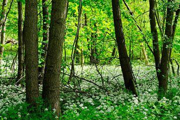 In het wilde bos van Ostsee Bilder