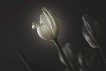 De Tulp van Jefra Creations