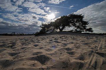 De eenzame boom van Jan Willem Oldenbeuving