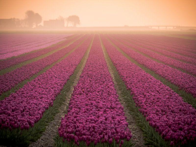 Tulpen im Nebel von Martijn Tilroe