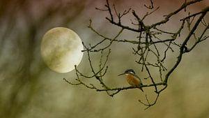 Ijsvogel in maanlicht