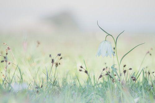 Enjoying Wild in Spring