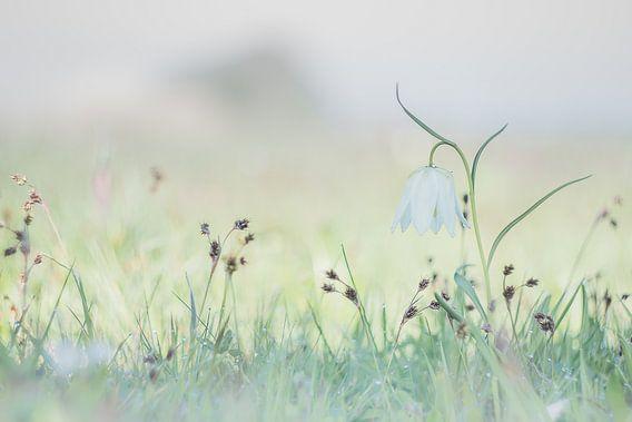 Enjoying Wild in Spring van Frensis Bol