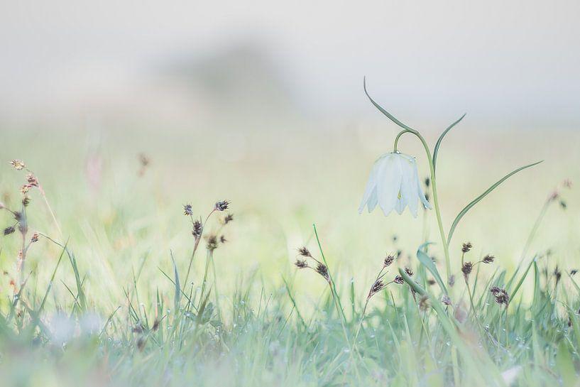 Enjoying Wild in Spring van Frensis Kuijer