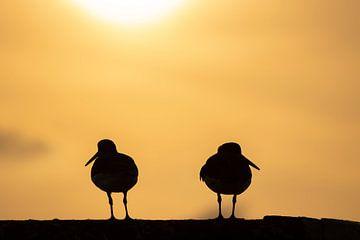 Silhouet van twee scholeksters bij zonsopkomst van Bas Ronteltap