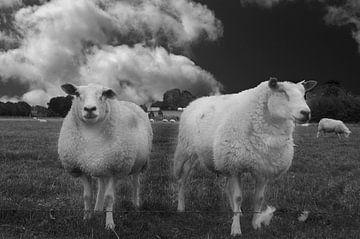 Een prachtig Hollands tafereel von Teus Kooijfotografie
