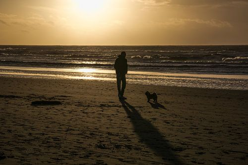 Doggy beach walk.