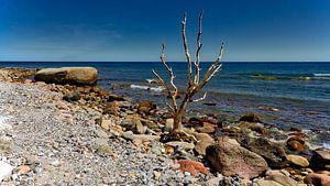 Strand Meer Felsen und Baum, am Kap Arkona Rügen Ostsee.