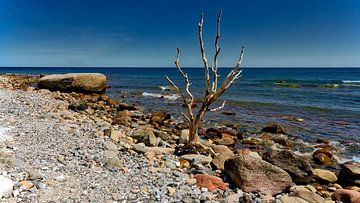 Strand zee  rots en boom,bij  Cape Arkona Rügen Oostzee. van Twan van den Hombergh
