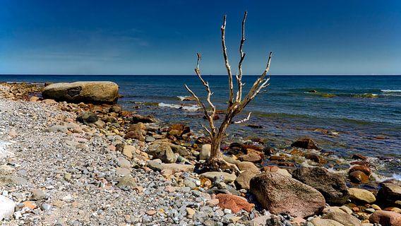 Strand zee  rots en boom,bij  Cape Arkona Rügen Oostzee.