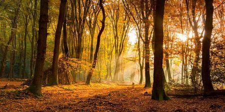 Zonlicht in het herfstbos