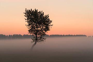 Der Baum im Nebel II von Mirac Karacam