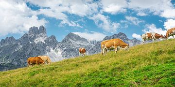 """Berglandschaft """"Kühe auf der Alm"""" von Coen Weesjes"""