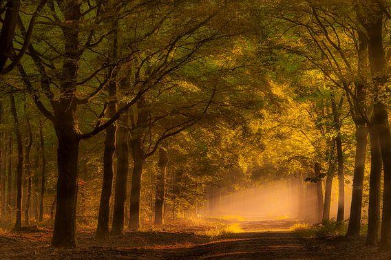 Zonsopkomst in het bos.  van Piet Haaksma