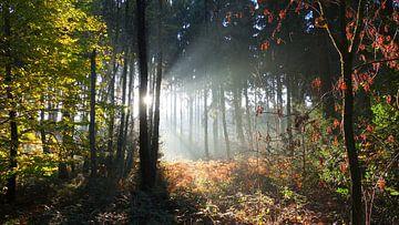Märchenwald von Daphne Photography