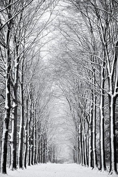 Besneeuwde Bomen van Jacques Jullens