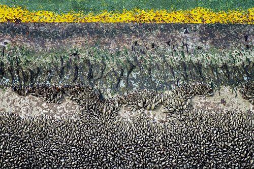 mosselen en zeewier op een gele boei