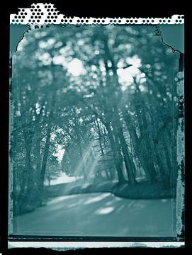 forêt magique en lumière d'ambiance sur Karel Ham