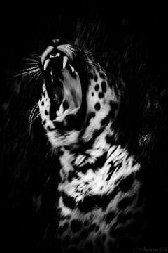 Jaguar noir et blanc sur Malou van Gorp