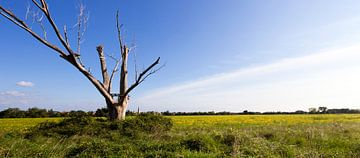 Einsamer Baum
