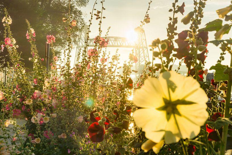 Bloemen voor De Hef in Rotterdam van Michel van Kooten