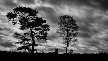 Eine komplizierte Berechnung; zwei Bäume vor einem Wolkenhimmel von fünfzig Grautönen von Studio de Waay