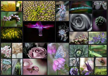 Collage van bloemen van Helga van de Kar