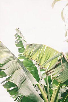 Bananenblätter von Patrycja Polechonska