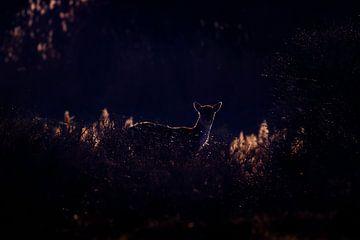 Tegenlicht van Pim Leijen