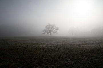 Einsamer Baum von Theo Bauhuis