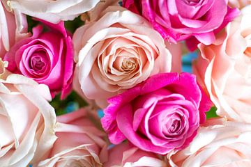 Roze rozen detail van DeedyLicious