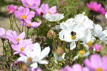 Bloembed voorjaar van Ellinor Creation