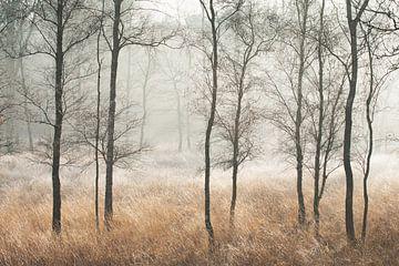 Kalter Morgen von Ellis Pellegrom
