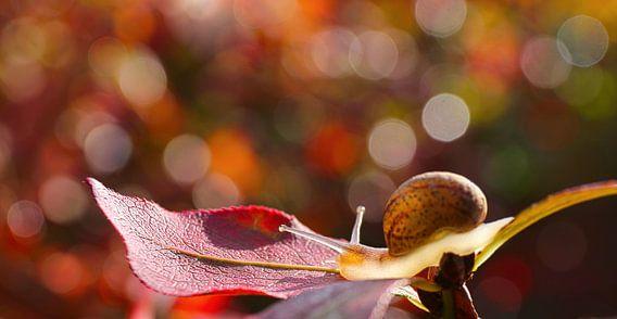 Slak met een herfstkleuren bokeh achtergrond