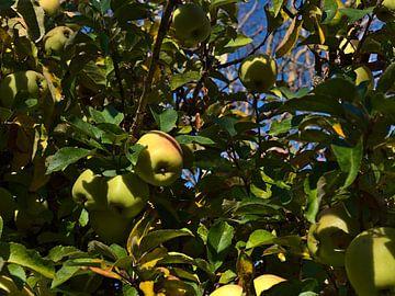 Pommes mûres accrochées à un pommier en automne sur Timon Schneider