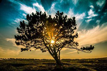 Einzelner Baum von peterheinspictures
