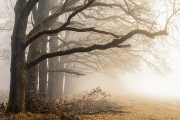 Naturel van Thomas Jansen