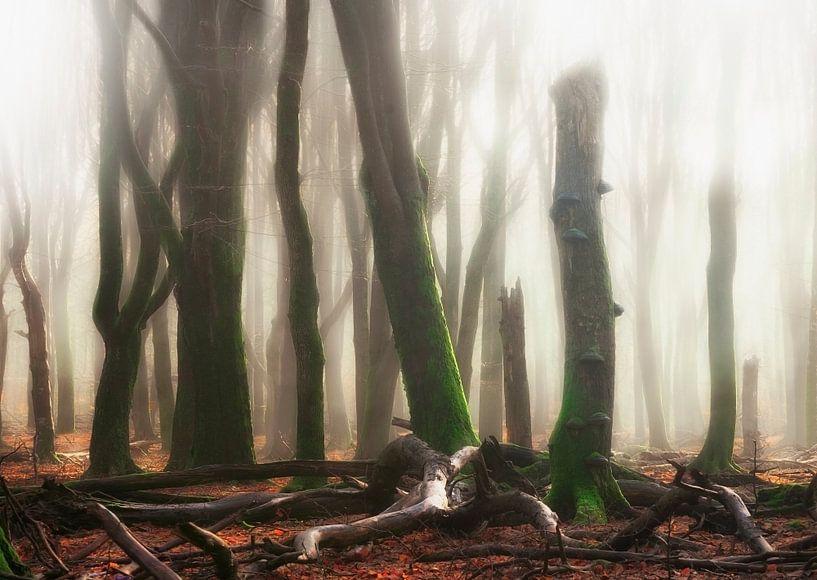 Forest flames van Rob Visser