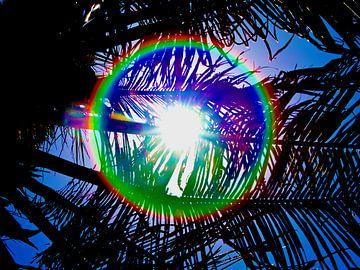 zon schijn door een palmboom van kees luiten