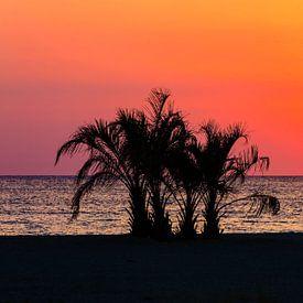 Palmen am Meeresstrand im Sonnenuntergang von Frank Herrmann