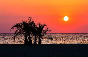 Palmbomen op het strand bij zonsondergang