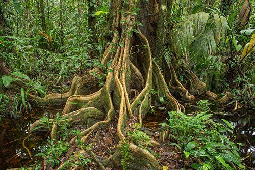 Wortels van een boom in de jungle