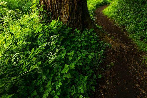Wandel het bos in