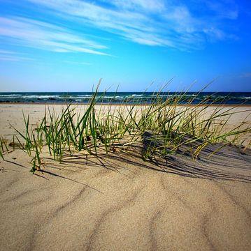 Sandwellen sur Ostsee Bilder