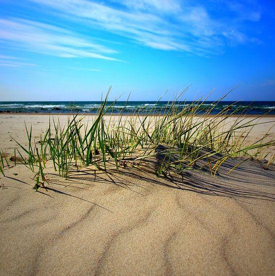 Sandwellen van Ostsee Bilder
