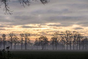 bomen onder een gouden lucht van Tania Perneel