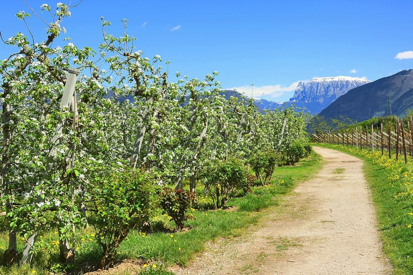 Apple Trees in full bloom van Gisela Scheffbuch