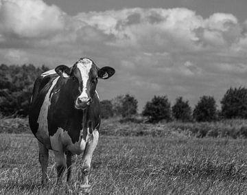 Kühe von By Foto Joukje