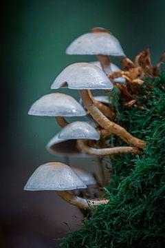 Pilze im Herbst von Jayzon Photo