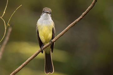 Vogel die de camera bekijkt von Leon Doorn
